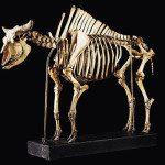 Il Museo Regionale di scienze naturali di Torino