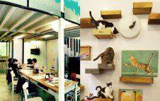 Il MiaGola Caffè, il locale per gli amici dei gatti a Torino