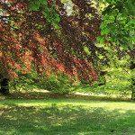 Il Parco della Rimembranza: escursioni nella natura a pochi passi dal centro di Torino