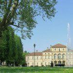 L'albero più vecchio di Torino, splendido monumento verde del XVIII secolo