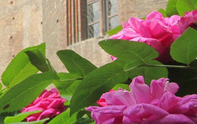 Visita al Giardino di Palazzo Madama a 1€