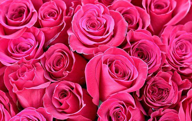 La Festa delle Rose di Venaria