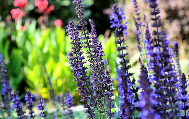 FLOR – Mostra mercato di florovivaismo