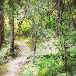 """Le """"Terre Ballerine"""" di Montalto Dora: un bosco magico vicino Torino"""