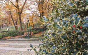 Il Giardino Roccioso del Valentino: percorsi sensoriali e passeggiate romantiche