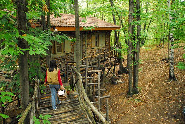 villaggio-case-alberi-piemonte_4