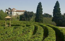 Il labirinto del Castello di Masino: perdersi tra le duemila piante del secondo labirinto più grande d'Italia