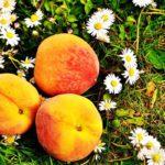 Agosto 2017: le sagre, le fiere e le feste popolari in Piemonte