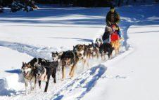 Sleddog in Piemonte: un viaggio emozionante con i cani da slitta tra valli innevate e boschi Alpini