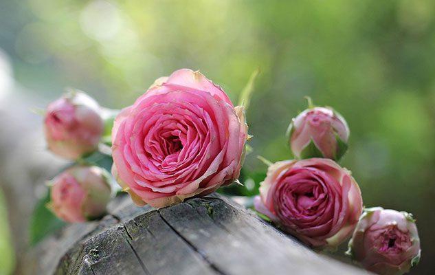 Festa delle Rose 2018 a Venaria: Fiori, Fragranze e Sapori