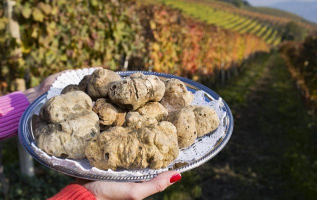 Tour del Tartufo: ricerca con guida esperta e degustazioni di vini Barolo
