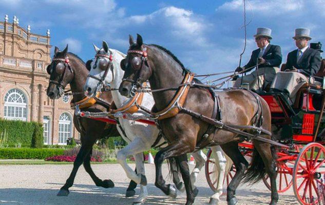 Cavalli e carrozze da fiaba alla Venaria Reale