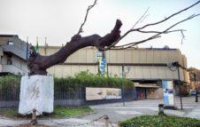 Gam di Torino: orari, prezzi, biglietti e riduzioni