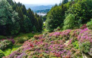 La Conca dei Rododendri: la fioritura più bella d'Italia nelle Alpi del Piemonte