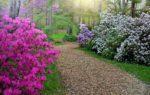 La Conca dei Rododendri: la fioritura più bella d'Italia nelle Alpi Biellesi