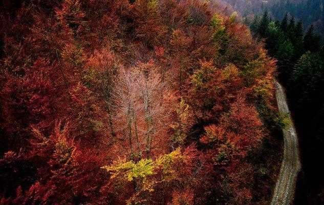 Foliage nell'Oasi Zegna: spettacolari passeggiate tra i colori d'autunno