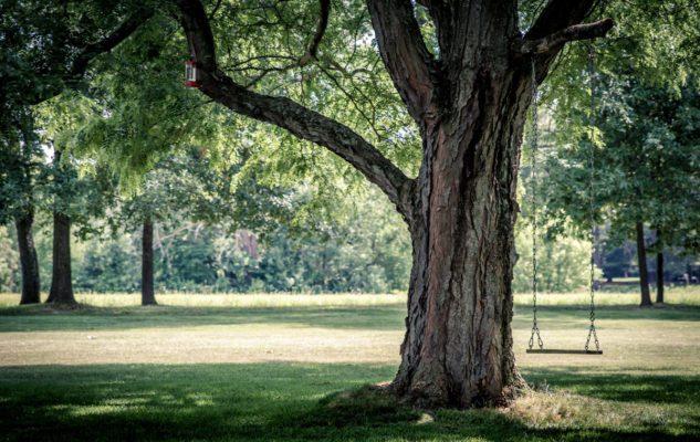 1000 alberi per Torino a Parco Dora per la Giornata dell'Albero 2018