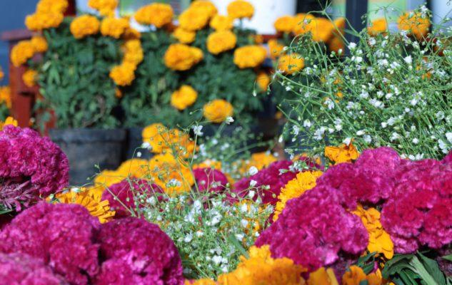 Flor Primavera 2019: Torino si trasforma in un grande giardino