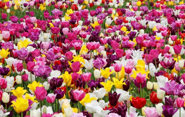 Sboccia la primavera in Piemonte: le 6 più belle fiere e mostre di fiori del 2019