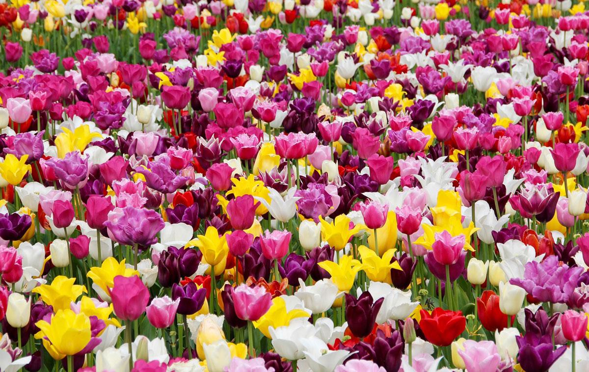 Fiera Fiori.Sboccia La Primavera In Piemonte Le 6 Piu Belle Fiere E Mostre Di