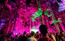Deep in the tree: la foresta suona techno tra spettacoli di luci e alberi secolari
