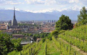 """L'antica """"Vigna della Regina"""" di Torino dove nasce l'unico vino urbano DOC del mondo"""