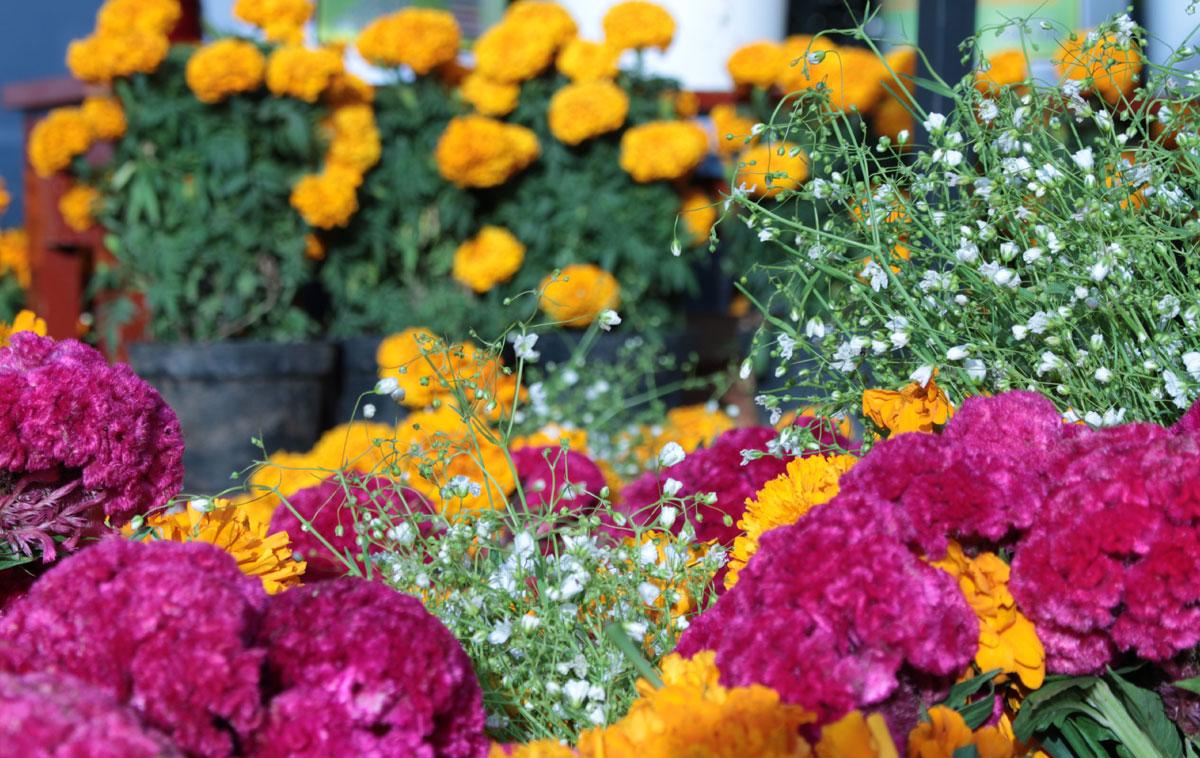 Fiori Del Mese Di Giugno flor primavera 2020: torino si trasforma in un grande