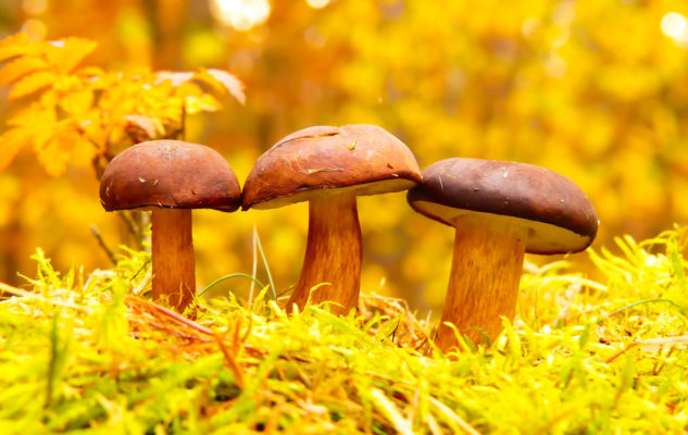 Alla scoperta dei Funghi: mostra didattica al Borgo Medievale