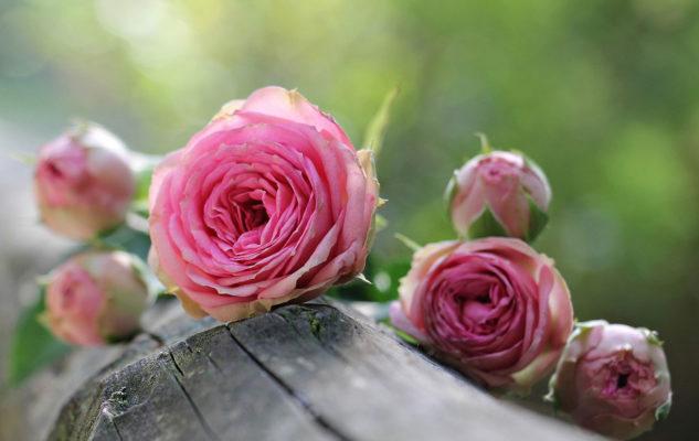 Festa delle Rose 2020 a Venaria: Fiori, Fragranze e Sapori