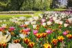 Messer Tulipano passeggiate virtuali