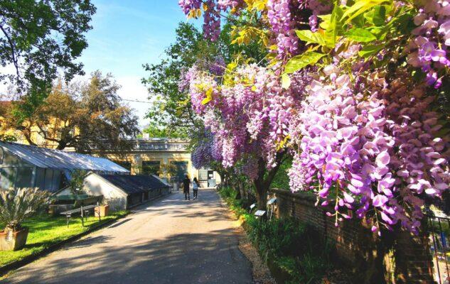 Orto Botanico Torino fiori