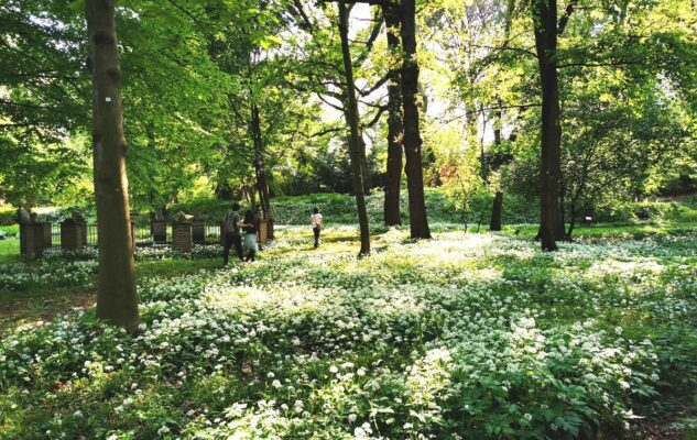 Orto Botanico Torino boschetto