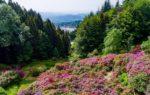 Oasi Zegna: nelle montagne del Piemonte un paradiso di fiori, piante e paesaggi incantanti