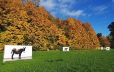 La Magia del Foliage al Castello di Miradolo: visite su prenotazione tra Natura e Fotografia