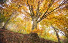 Foliage Oasi Zegna 2020