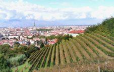 Vendemmia a Torino - Grapes in Town 2020: eventi e degustazioni in giro per la città e sul web
