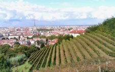 Vendemmia a Torino - Grapes in Town 2020