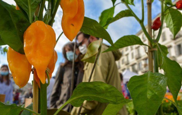 AgriFlor Novembre: in Piazza Vittorio torna il magico giardino colorato di Flor