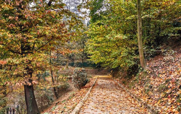 Collina Torino sentieri