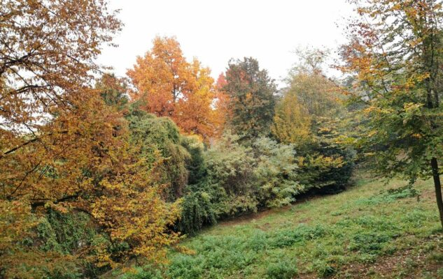 Parco Leopardi Torino alberi