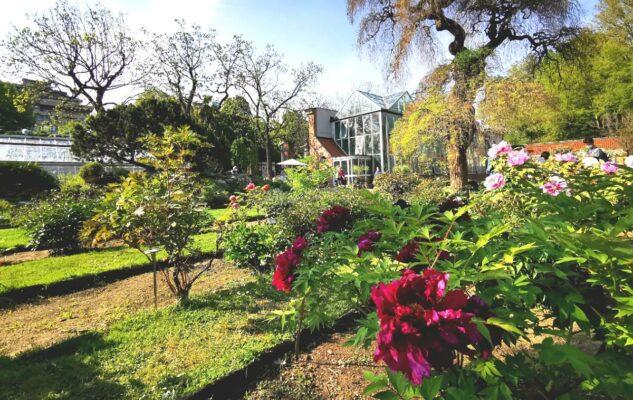 Visite Guidate all'Orto Botanico per ammirare la fioritura delle rose