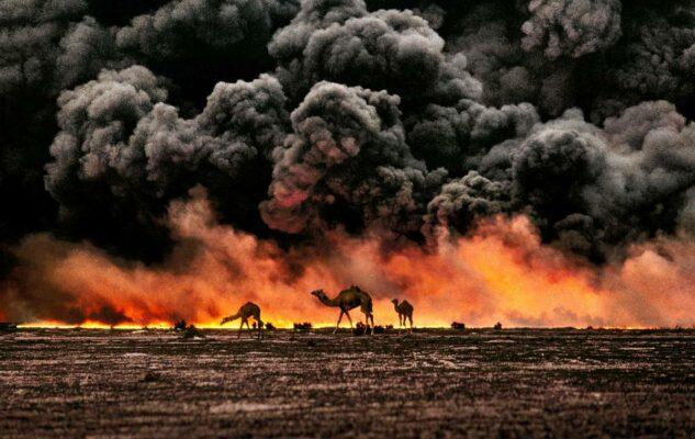Steve McCurry – ANIMALS: a Torino la mostra con gli scatti del grande fotografo