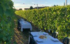 Cena in Vigna: degustazioni sotto le stelle nei vigneti delle Langhe
