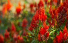 FLOReal 2021: in autunno a Stupinigi la grande mostra-mercato di fiori e piante