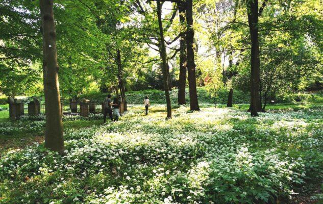 Dejeuner sur l'herbe: picnic gourmet tra fiori e piante all'Orto Botanico di Torino