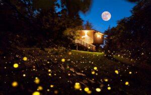 Glamping e foliage in Piemonte: dormire in una casa sull'albero immersi nei colori dell'autunno