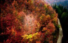 Foliage 2021 all'Oasi Zegna in Piemonte: passeggiate e attività nelle sfumature d'autunno
