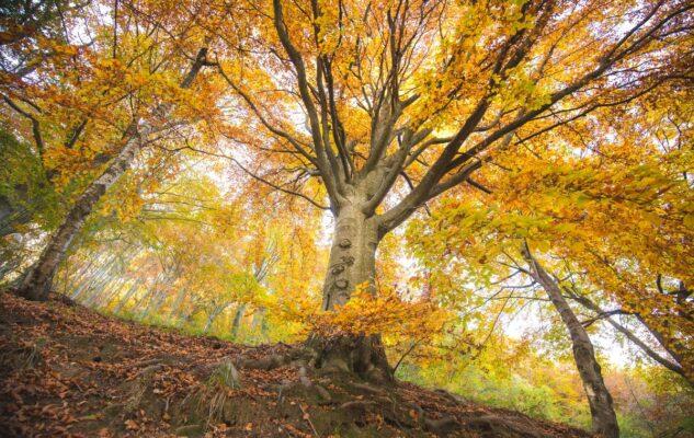 Foliage 2021 Oasi Zegna Piemonte