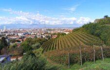 Vendemmia a Torino – Grapes in Town 2021: eventi e degustazioni in giro per la città